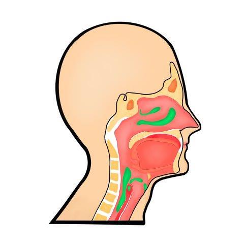 Post-nasal-discharge